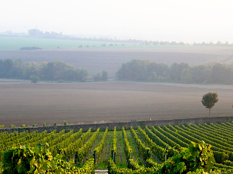 vineyards in Kiedrich