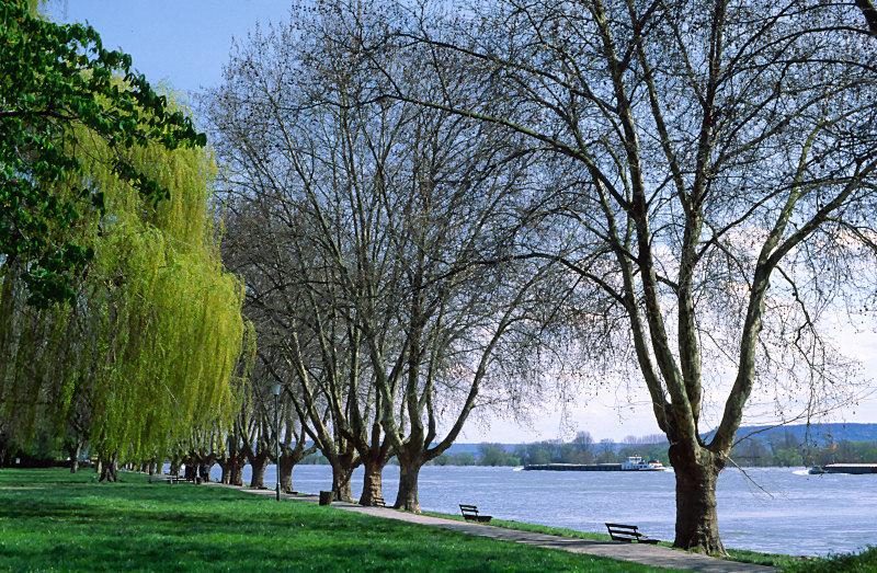 Der Rhein bei Schierstein